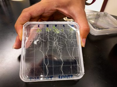 Colby Phillips' hand is holding a plastic box with roots growing inside.